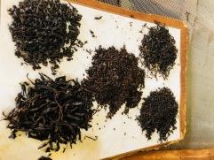 Tea during processing