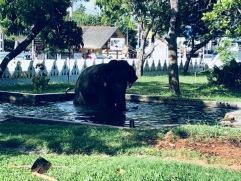 Elephant bath in Matara