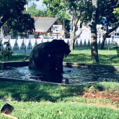 Elephant bath in Matara