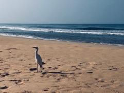 Morning walk on the beach - Bentota